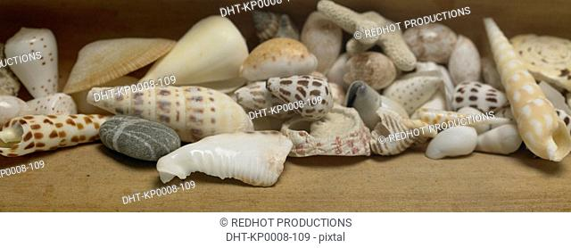 Various Shells sitting on table indoors