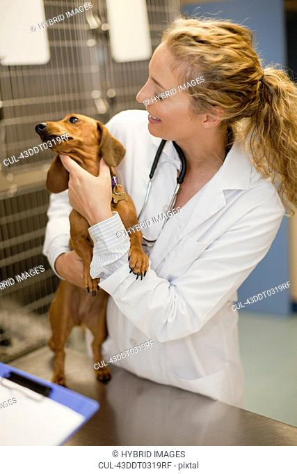 Veterinarian holding dog in kennel