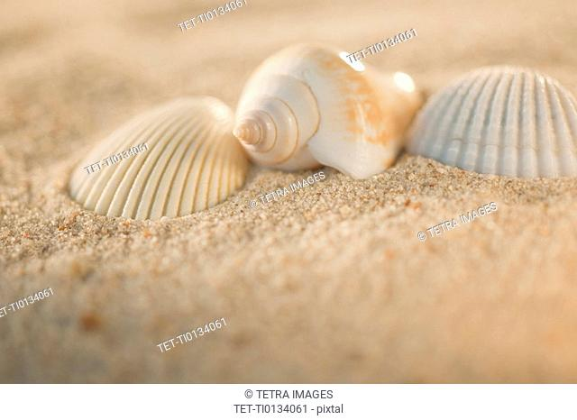 Sea shells in sand