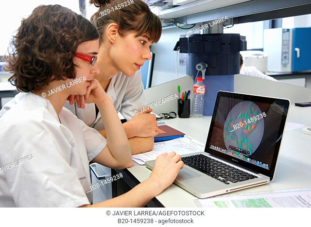 Data discussion, cell culture, Tissue engineering Lab, Research in Regenerative medicine, Biodonostia Health and Biomedicine Research Institute, San Sebastian