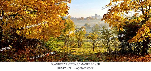 Autumn landscape in Quedlinburg, castle hill with collegiate church of St. Servatius behind, UNESCO, Quedlinburg, Saxony-Anhalt, Germany