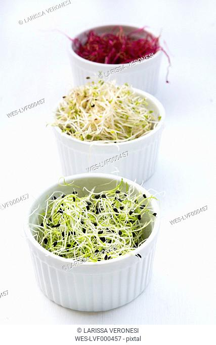 Three bowls of different sprouts, beetroot sprouts, alfalfa sprouts (Medicago sativa) and leek sprouts