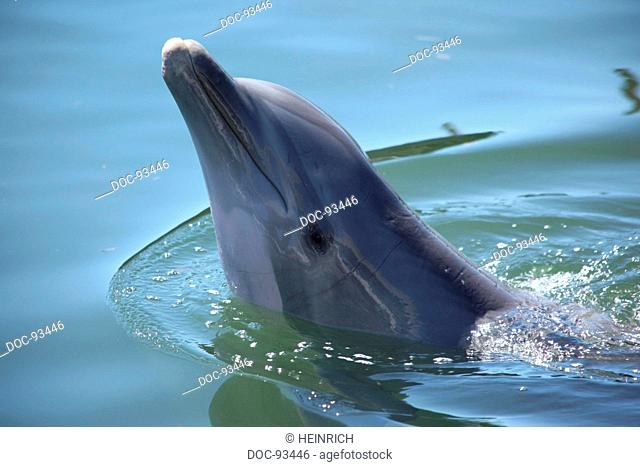 a dolphin swimming in a basin of a biological research station - therapy with dolphins