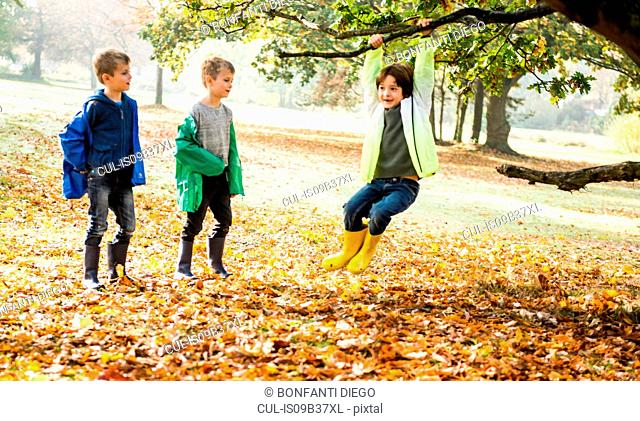 Three boys in park, in autumn, one boy swinging on tree