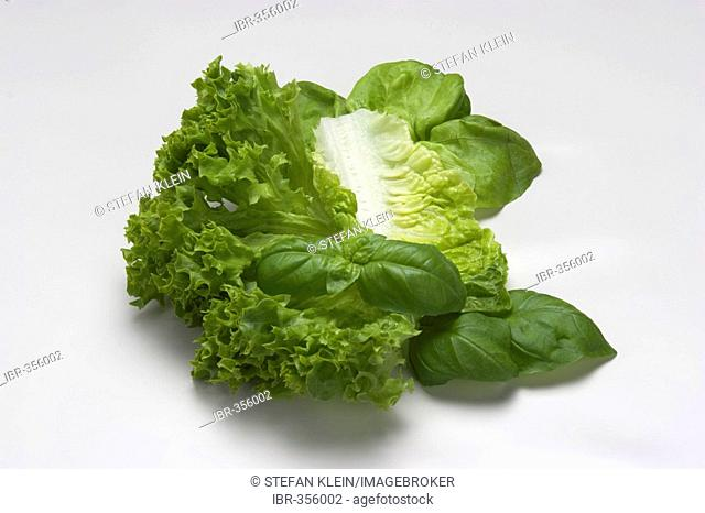 Lettuce leaves with basil