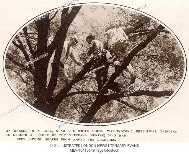 An arrest in a tree, near the White House, Washington: detectives bringing to ground a leader of the veterans(centre), who has been giving orders from amongst...