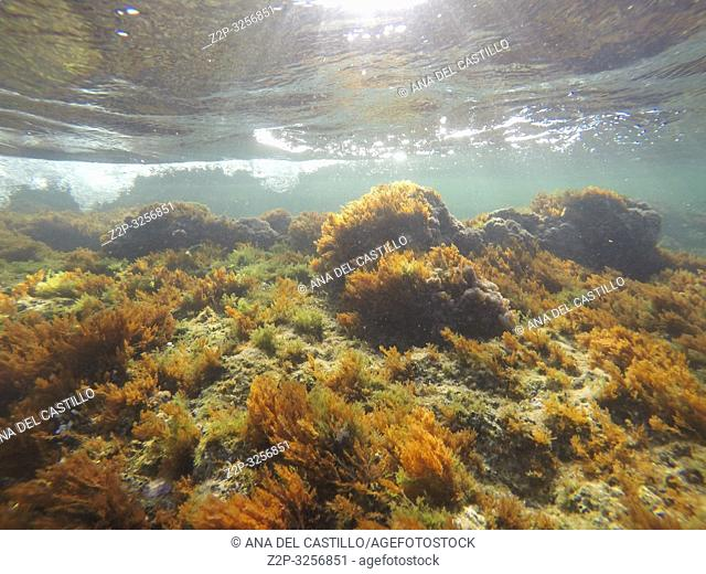 Underwater Las Rotas beach San Antonio cape in Denia Alicante Province Spain