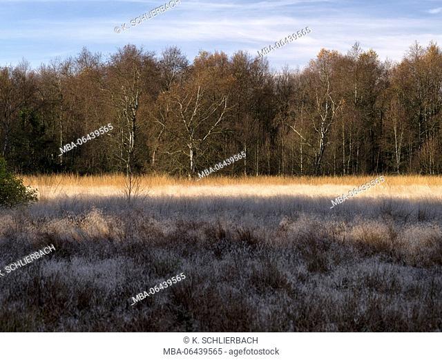 Germany, Bavaria, Rhön Biosphere Reserve, UNESCO biosphere reserve, Naturschutzgebiet Schwarzes Moor (nature reserve), birches and moor grasses