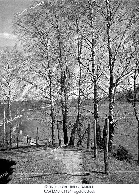 Landschaftsbild mit Birkenbäumen bei Treuburg in Masuren, Ostpreußen, 1930er Jahre. Landscape with birch trees near Treuburg in Masuria, East Prussia, 1930s