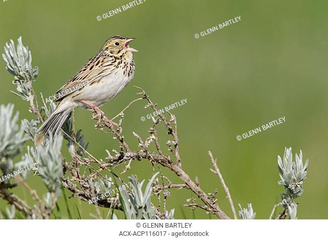 Perched alberta canada Stock Photos and Images | age fotostock