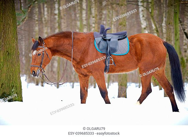 Chestnut sidesaddle horse without her rider in the winter forest