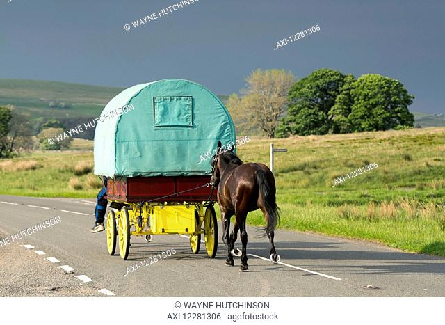 Covered caravan being pulled by a horse travelling along road to Appleby Fair; Cumbria, England