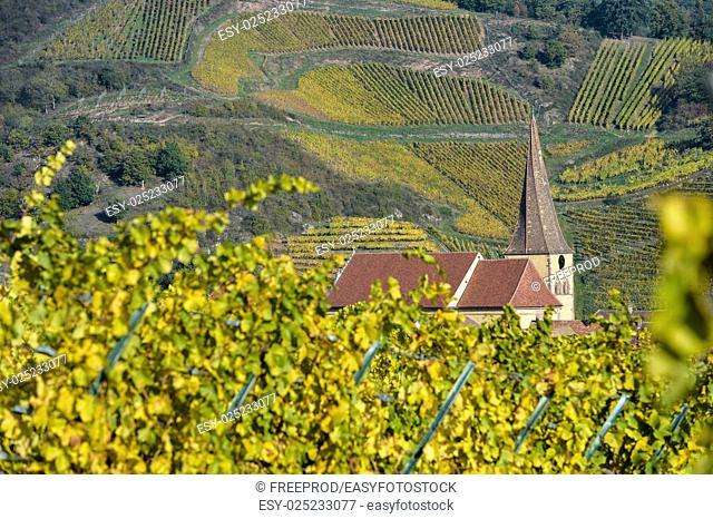 Niedermorschwih, Alsatian vineyards, Alsace, France, Europe, Autumn, Mountain,