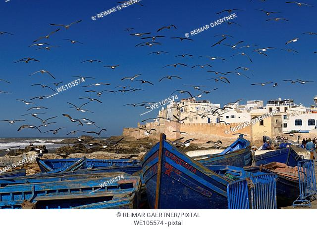 A flock of seagulls near fishermen cleaning their catch with blue boats and Essaouira ramparts, Morocco