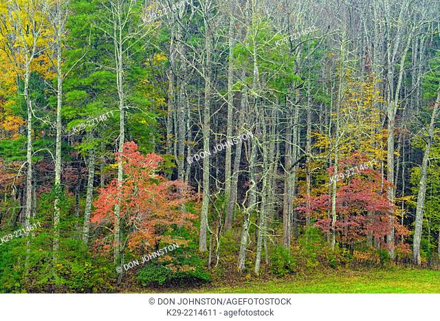 Colourful autumn foliage in Cades Cove, Great Smoky Mountains NP, Tennessee, USA