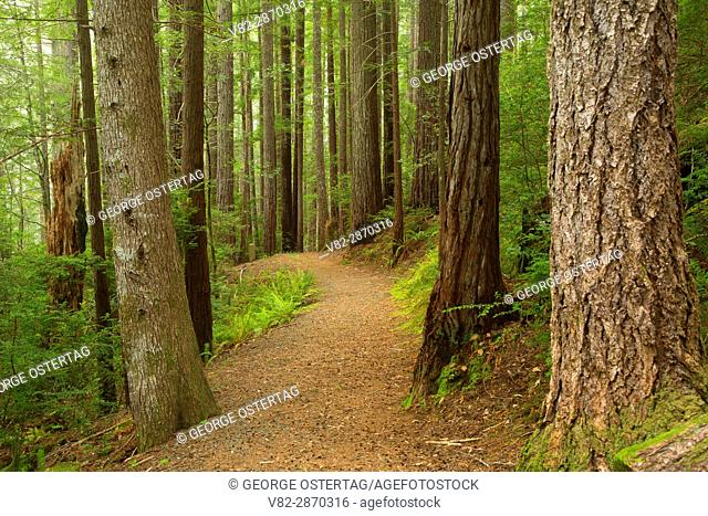 Oregon Redwoods Interpretive Trail, Siskiyou National Forest, Oregon