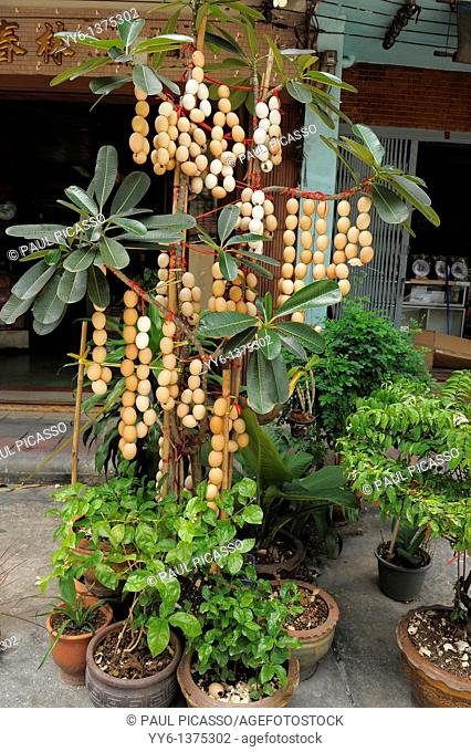 egg shells stringed together and hanged on plants for good luck, bangkok chinatown, bangkok, Thailand
