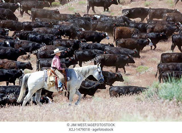Baker, Nevada - A boy helps move cattle to a new pasture on the Baker Ranch  The ranch raises cattle and grows alfalfa and other crops  Nevada ranchers are...