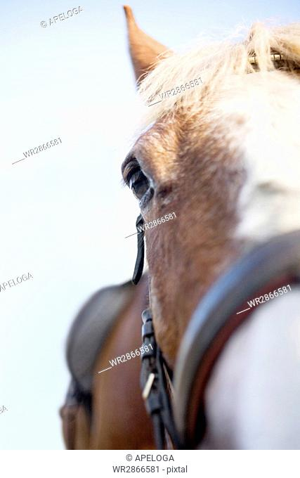 Close-up portrait of horse against clear sky