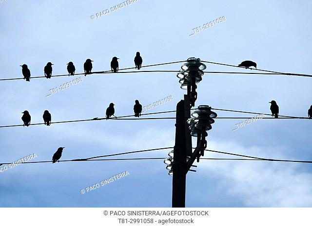 birds on telephone wires, Valencia