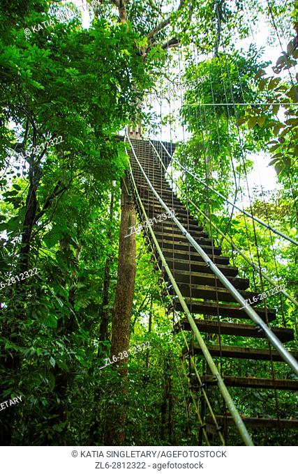Ladder and jungle landscape. Isla Bastimentos, Bocas del toro, Panama