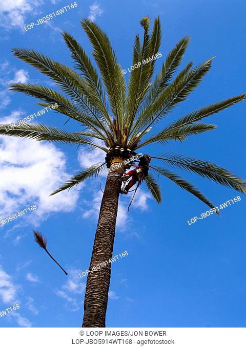 Trimming palm trees outside the Palma de Mallorca bullring