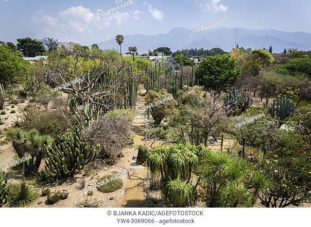 Museum of Cultures of Oaxaca, former Santo Domingo de Guzman convent, Botanical garden, Oaxaca, Mexico