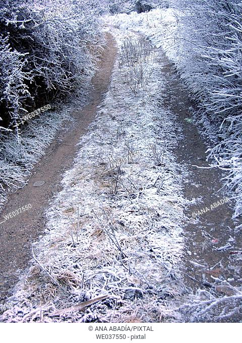 Frozen path
