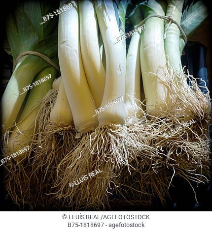 manojo de cebollas tiernas, bunch of spring onions