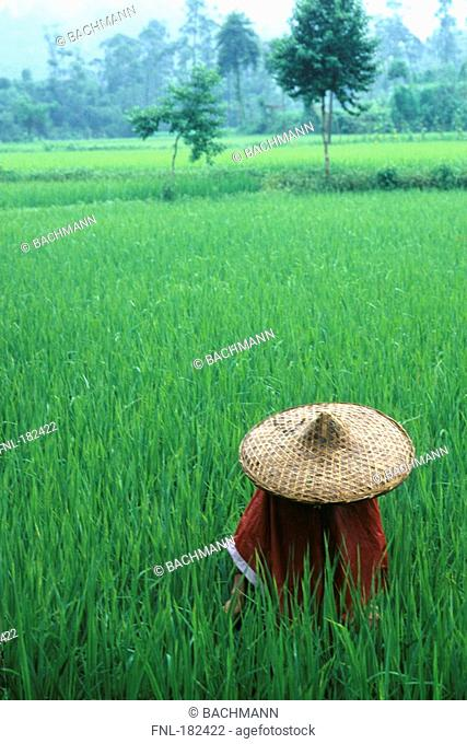 Straw hat in rice paddy, China