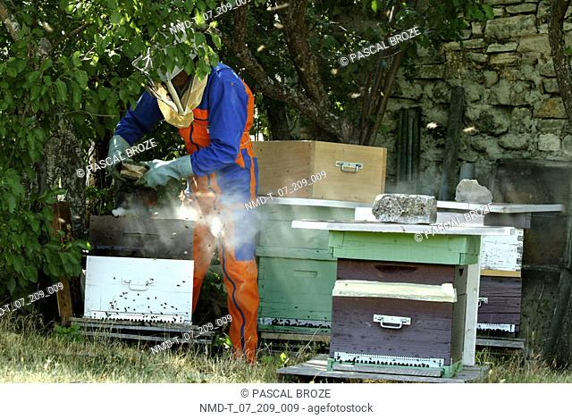 Beekeeper standing near beehives, Provence, France