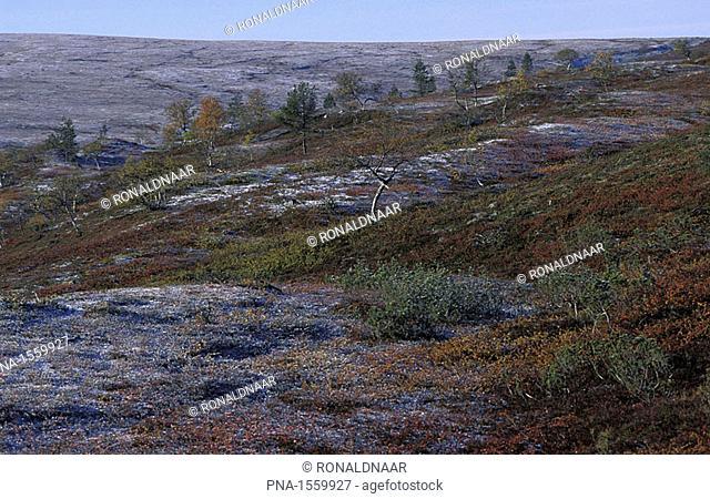 Autumn or Ruska landscape, a freshly snowed fjell in Saariselka, the mountainous part of the national park Urho Kekkonen, north-eastern Finnish Lapland