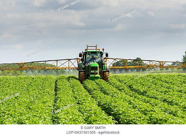 England, Norfolk, Fakenham. Mechanised spraying of commercial potato crop against blight