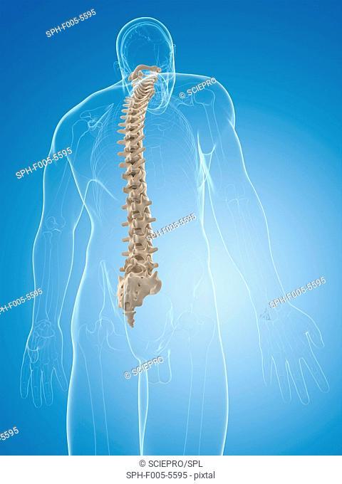 Spine, computer artwork