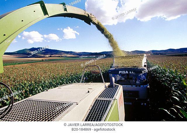 Corn harvesting. Navarre. Spain