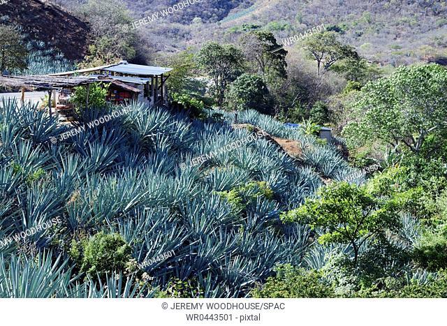 Remote Landscape with Succulents
