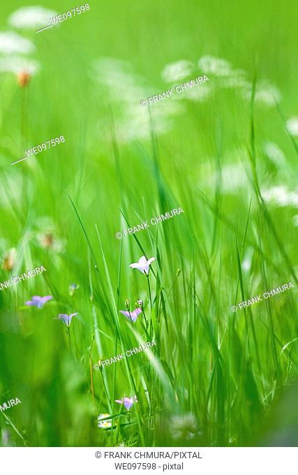 spring wild flowers in lush green garden - short depth of field