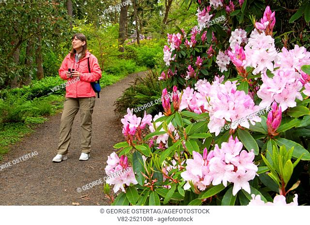 Garden path with Queen of the May rhododendron in bloom, The Rhododendron Garden, Hendricks Park, Eugene, Oregon