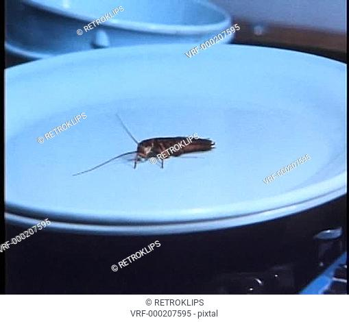 Close-up of cockroach lying on plate