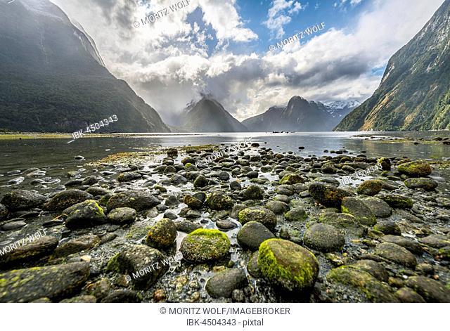 Moss covered stones, Miter Peak, Milford Sound, Fiordland National Park, Te Anau, Southland Region, Southland, New Zealand