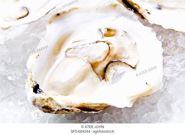 Blue Point Oyster on Half Shell