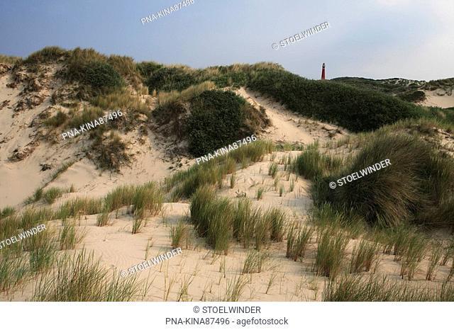 National Park Schiermonnikoog, Westerduinen, Schiermonnikoog, Skiermûntseach, Wadden islands, Frisia, The Netherlands, Holland, Europe