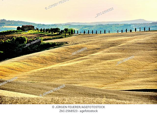 Rolling hills of cornfields with farming house and cypress alley, Tuscany, Italy
