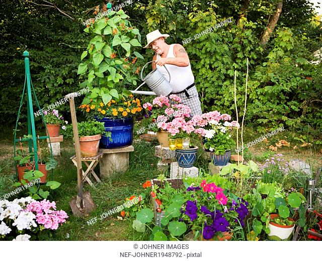 Senior man watering plants in garden, Skine, Sweden