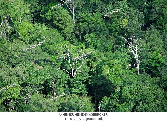 Aerial view of rainforest, Guyana, South America