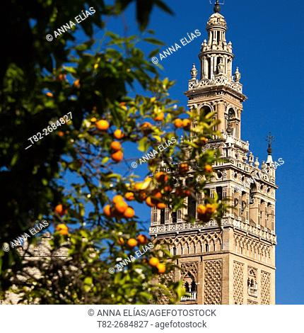 Giralda tower, Seville, Andalusia, Spain