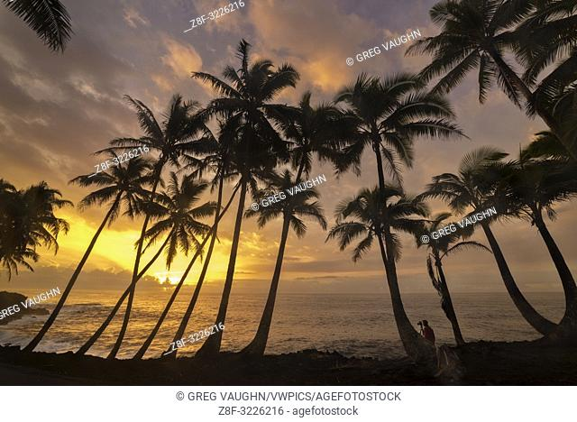 Man photographing coconut palm trees and sunrise at Kama'ili on the Kalapana coast of the Big Island of Hawaii