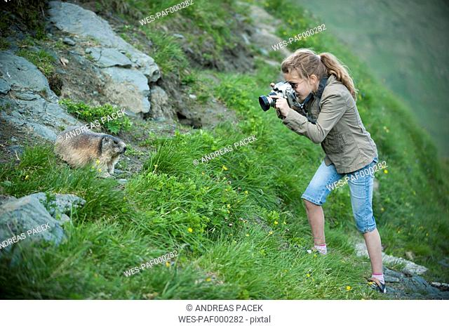 Austria, Carinthia, Kaiser-Franz-Josefs-Hoehe, girl photographing alpine marmot (marmota marmota)