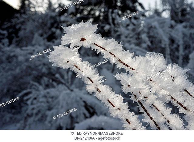 Ice crystals during cold spell at Lynx Creek, Alaska