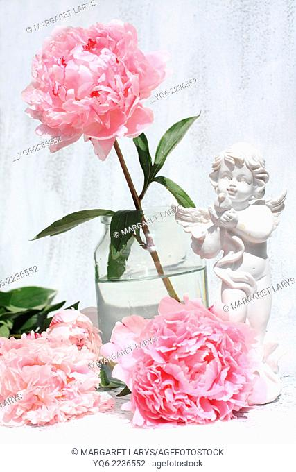 Beautiful soft pink peonies artistic still life on white painted background